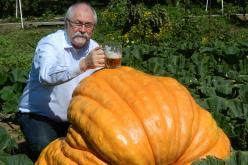 Scandal Brewing Offers Second 'Wonder' – Grand Canyon Pumpkin Bock