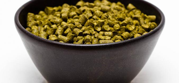 Craft Beer Hop Profile: Ella Hops