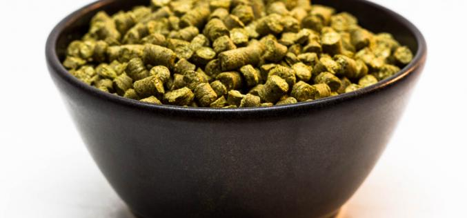 Craft Beer Hop Profile – Amarillo Hops