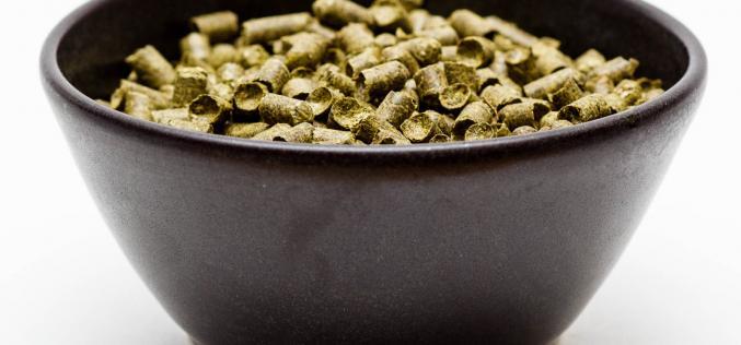 Craft Beer Hop Profile – Fuggles Hops