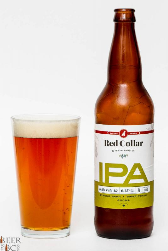 Red Collar Brewing IPA Review