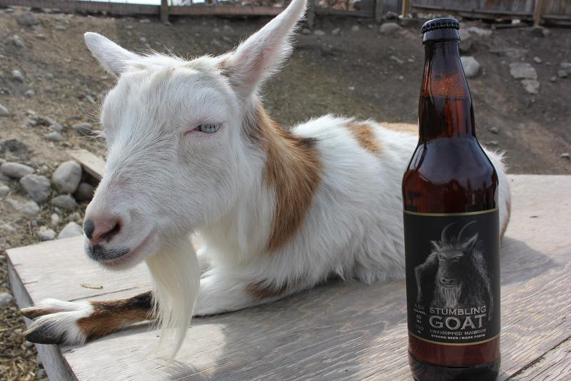 Cannery Brewing Stumbling Goat
