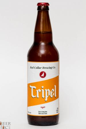 Red Collar Brewing Co. - Tripel Review