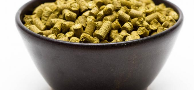 Craft Beer Hop Profile – Chinook Hops