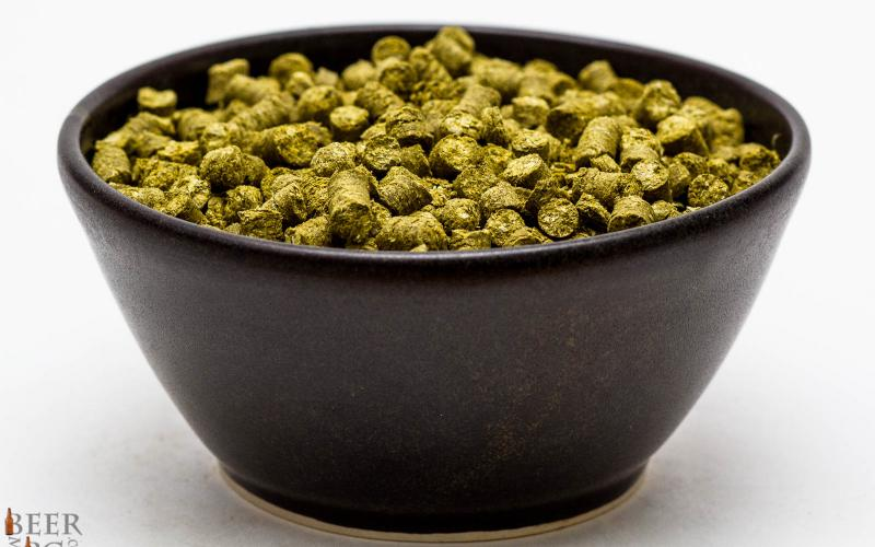 Craft Beer Hop Profile – Sterling Hops