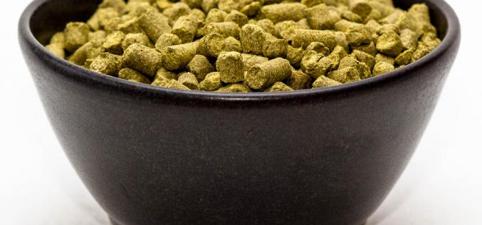 Craft Beer Hop Profile – Warrior Hops