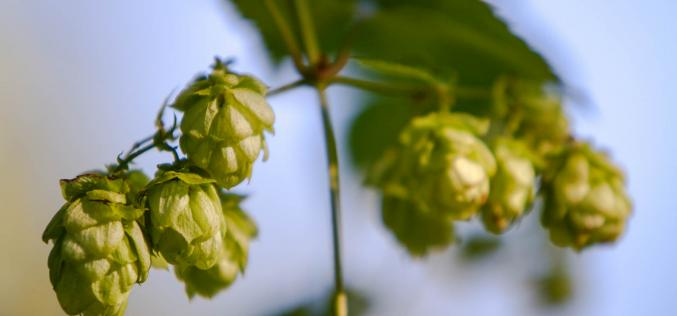 Hop Fest, Abbotsford's Fresh Beer Festival Attracts 17 of BC's Best Breweries in 1st Year!