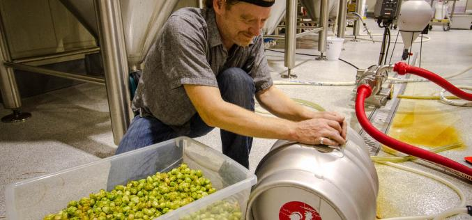Fresh Hop Beer Season Has Arrived – From Wet Hop Harvest to Craft Beer Video