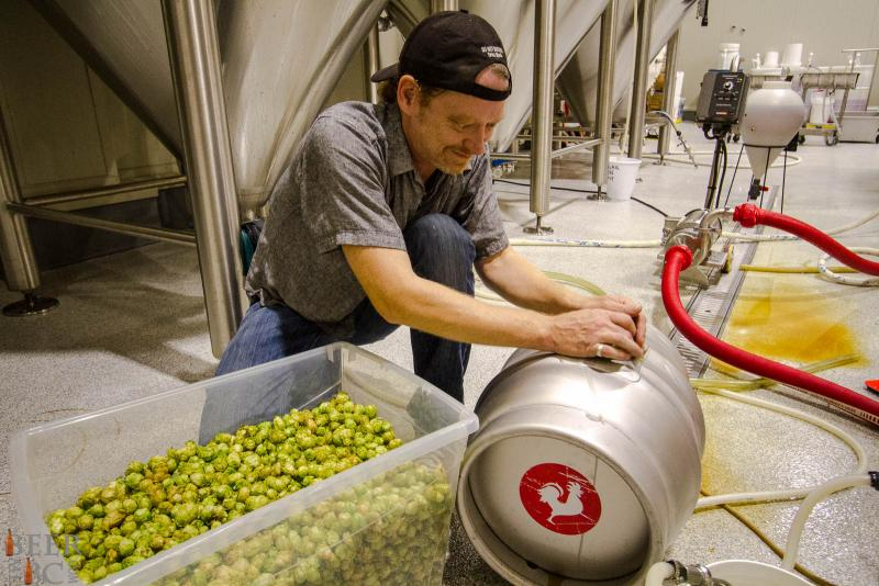Loading A Cask With Fresh Hops
