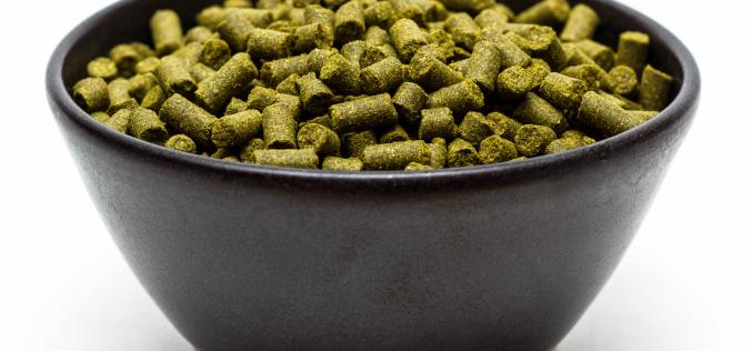 Craft Beer Hop Profile – Polaris Hops