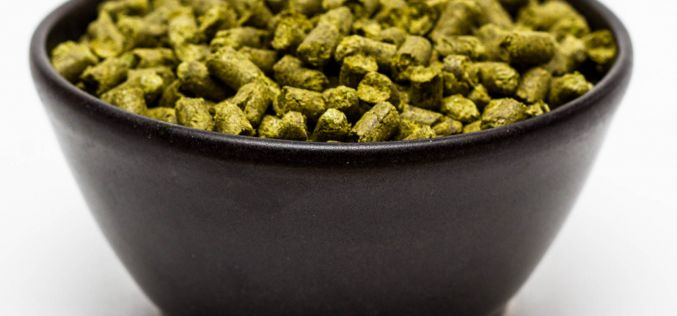 Craft Beer Hop Profile – Helga Hops