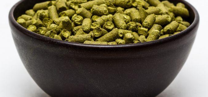 Craft Beer Hop Profile – Willamette Hops