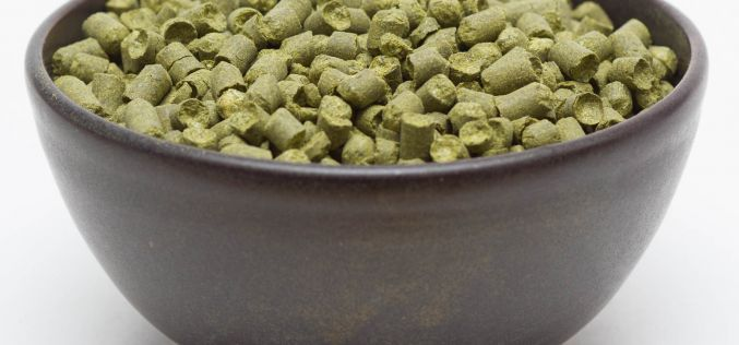 Craft Beer Hop Profile – Hallertauer Tradition Hops