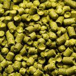 Hallertau Tradition Craft Beer Hops