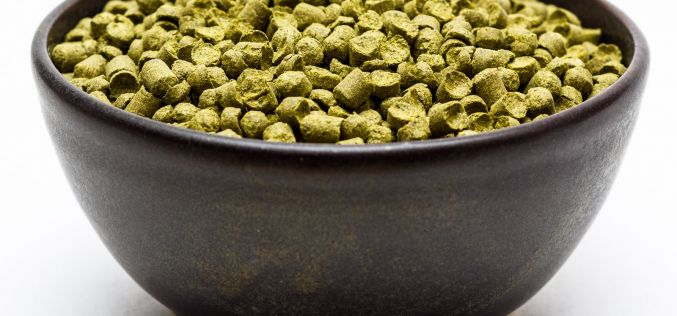 Craft Beer Hop Profile – Hallertau Perle Hops