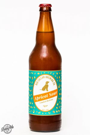 Red Collar Apricot Sour Ale Review