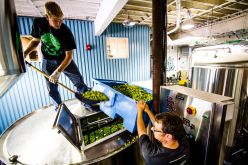 Fresh Hop Season Has Arrived – The Story of Two Craft Beer Icons, Vern & Gary